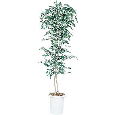 人工樹木 ニューハワイアンフィカス 2ツリー