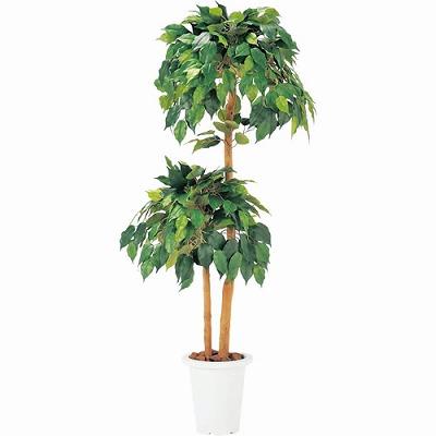 人工樹木 ベンジャミン 2ツリー 丸型