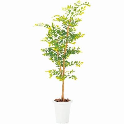 人工樹木 ゴールデンリーフ