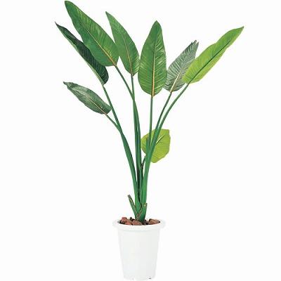 人工植栽 ストレチア