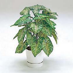 人工植栽 シンゴニウム
